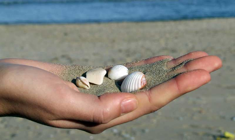 Sea-shells-and-sand-in-a-hand406