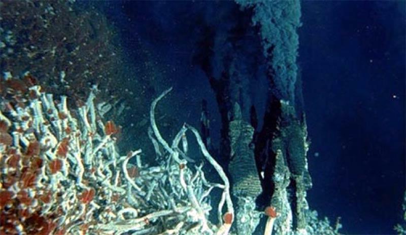 Okyanus diplerinde, volkanik etkiler sonucu oluşan termal bacalar, Güneş ışığının yokluğunda çevrelerinin ihtiyaç duyduğu ısı enerjisini sağlayabiliyorlar. Bu şekilde hayat milyarlarca yıl kesintiye uğramadan sürebilir.