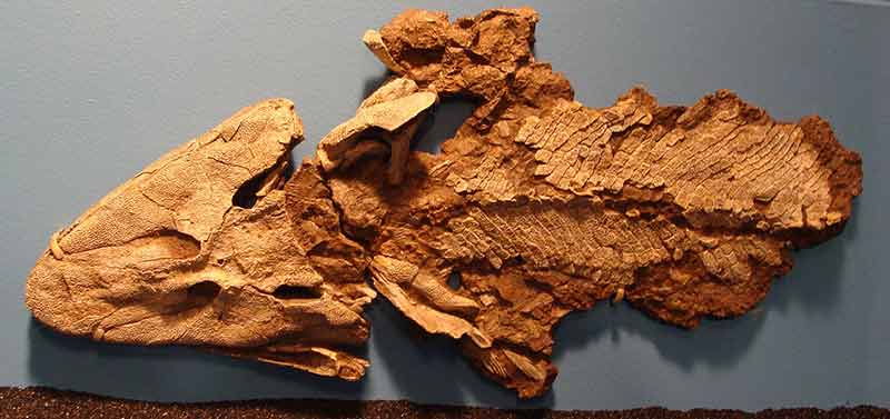 Tiktaalik_Chicago