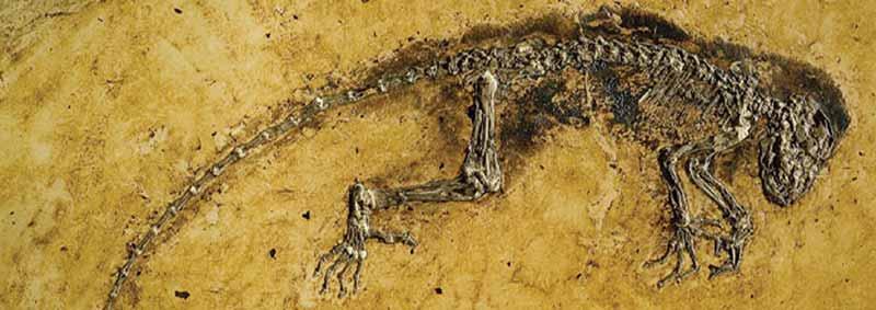 ida_fossil