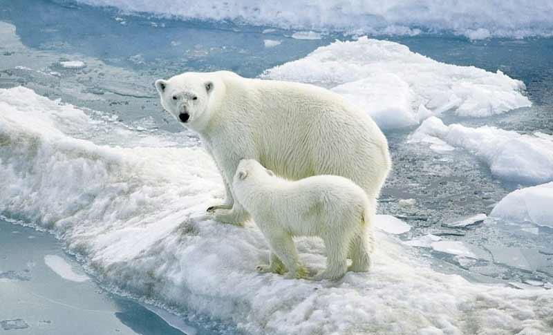Sandığınızın aksine, kutup bölgelerinde kar yağışı çok azdır.