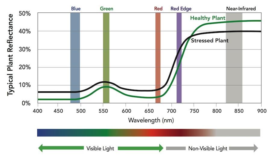 Grafik 1.Kırmızı Kenar, grafikte mor sütun ile gösterilmiştir. [3]